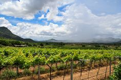 Asked to name the world's best wine country and you'll most likely tout the undulating vineyards of Italy, France or California. But Thailand? With its smouldering weather and chalky soil, Thailand is not top of a vinophile's bucket list. But Tamara Hinson discovers why it should be.
