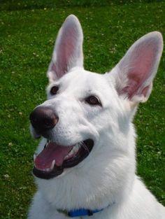 I'll know I'm in Heaven if I see a dog that looks like this one... my beloved Crystal.