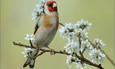 Pájaros Archives - Página 4 de 9 - Animal Mascota