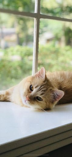 A beautiful orange kitty. Pretty Cats, Beautiful Cats, Animals Beautiful, Cute Animals, Cute Cats And Kittens, Baby Cats, Gatos Cats, Matou, Orange Cats