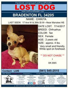 Have you seen Chikita? #Lost #dog #chihuahua #missingpets #Bradenton 34205 #LostFoundPets941 #ManateeCounty