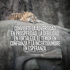 #optimista #millonario #negocios #vida #emprendedores #libertad