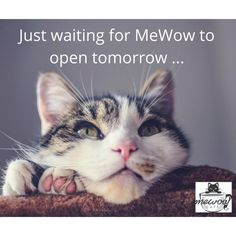 Well you know what they say ... Good things come to those who wait! #mewow #catcafe #doylestownkitties #adoptacat #catadoption #rescuecat #catrescue #catsandcoffee #cat #cats #catstagram #catsofinstagram #catlover #catlovers #kitten #adoptdontshop #catroom #catcondo #cafe #catlife New Instagram, Cats Of Instagram, Cat Cafe, Cat Condo, Cat Room, Cat Lovers, Adoption, Kitten, Animals