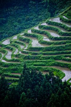 Rice Terraces on a rainy day, Japan
