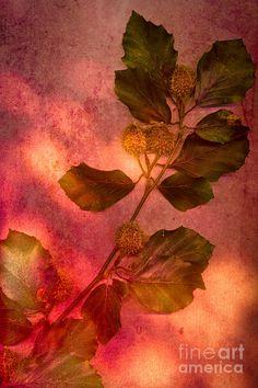 Shades Of Autumn Photograph by Jan Bickerton