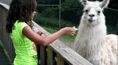 When this lady was JUST. NOT. HAVING. IT. | 17 Times Llamas Were Majestic
