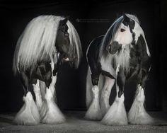 Tremendous Die 8 Besten Bilder Von Tinker Pferde Tinker Pferd Pferde Squirreltailoven Fun Painted Chair Ideas Images Squirreltailovenorg