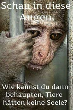 De quel droit les met-on en cage ?