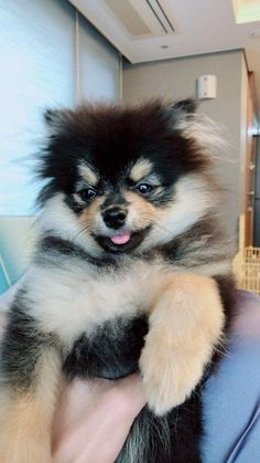 """""""You have a girlfriend?"""" When Min Sora met a strange guy by a … # Fanfiction # amreading # books # wattpad Pet Future, Bts Dogs, Most Cutest Dog, Baby Animals, Cute Animals, Pom Dog, Kim Taehyung Funny, Bts Taehyung, Cute Baby Dogs"""