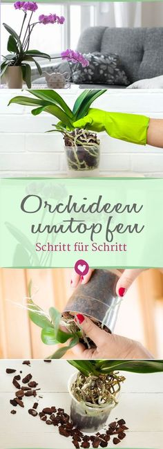 Repotting orchids: tips and tricks to keep the plants alive .- Orchideen umtopfen: Tipps und Tricks, damit die Pflanzen lang leben Orchids live longer (and more beautiful) when occasionally repotted. We show how it works. Herb Garden Design, Garden Pots, Garden Care, Orchid Plants, Orchids, Organic Gardening, Gardening Tips, Urban Gardening, Patio Plan