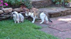 Unsere Katze Lilli und unser Häschen Schnuffel