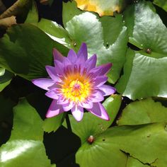 Lily pad flower..want this flower by my frog tattoo!!