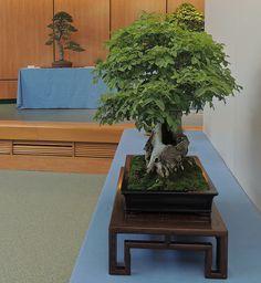 Artículo en: http://www.elhogarnatural.com/bonsai.htm y reportaje de la exhibición anual en Madrid en las páginas 28 a 33 de Cibernaturaleza, http://www.cibernaturaleza.com/cibernaturaleza1/index.html