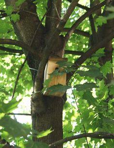 Осень – время вешать скворечники и синичники. Статья Олеси Емельяновой