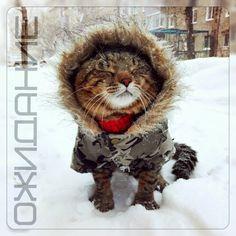 Зимушка-Зима не болей зима, погода, Россия, кот, скоро, Новый Год, с наступающим