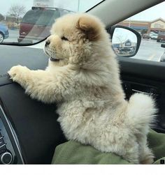 Who's ready for a road trip? — Cute Puppies - CHECK OUT ? Gif pictures of puppies Photo by via Who's ready for a road trip? — Cute Puppies - CHECK OUT ? Gif pictures of puppies Photo by via Funny Dog Pictures, Puppy Pictures, Animal Pictures, Gif Pictures, Funny Photos, Puppy Pics, Animals Photos, Fluffy Puppies, Cute Dogs And Puppies