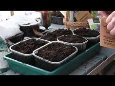 Vinterså dina grönsaker - ett smart sätt att förkultivera - YouTube