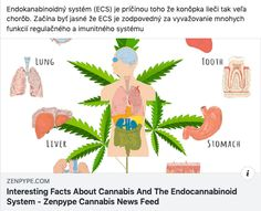 Interesting Facts About Cannabis And The Endocannabinoid System - Zenpype Cannabis News Feed Endocannabinoid System, Ways To Stay Healthy, Cannabis News, Central Nervous System, Stress Disorders, Cannabis Plant, Medical Conditions, Fun Facts, Patriots