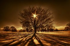 Tree Of Light by *lowapproach