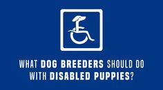What Should Dog Breeders Do With A Disabled Puppy?