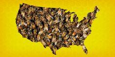 Half of honey bee colonies lost 2014-2015 - Business Insider