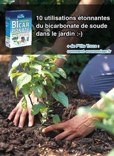 10 Utilisations Étonnantes du Bicarbonate de Soude Dans le Jardin.