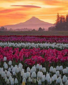 Oregon, Estados Unidos | USA