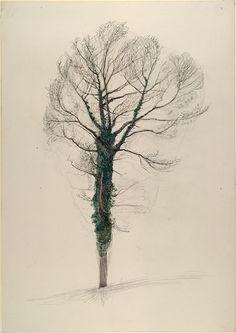 Winter Ivy, John Ruskin, c. winter 1872 - 1873