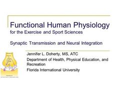 Functional Human Physiology for the Exercise and Sport Sciences Synaptic Transmission and Neural Integration Jennifer L. Doherty, MS, ATC Department of. Neuromuscular Junction, Signal Transduction, Florida International University, Neurotransmitters, Neurons, Physiology, Amino Acids, Physical Education
