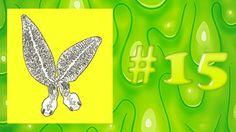 Zoosparkle - Schifanimali #15 - L'animale più fedele di tutti