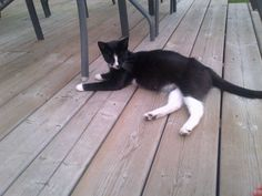 Found Cat - Unknown - Woodstock, ON, Canada N4S 7T8 on August 15, 2014 (13:00 PM)