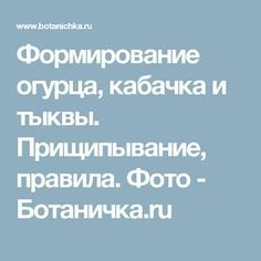 Формирование огурца, кабачка и тыквы. Прищипывание, правила. Фото - Ботаничка.ru