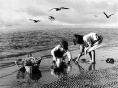 Pequenos mariscadores em Betanços circa 1960. Foto de Veiga Roel.