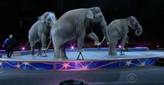 """""""The Greatest Show on Earth"""" is closing after 146 years. Mireya Villarreal has more on why the Ringling Brothers Circus is shutting down. Big Top Circus, Circus Train, Ringling Brothers Circus, Carnivals, Cbs News, Wonderful Things, Sadness, Trains, Lion Sculpture"""
