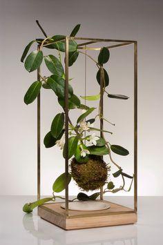 Plant Bondage - brass, ash wood, porcelain