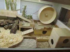 Near-natural hamster enclosures: Live better: enclosure with 4 enclosures a - # 1 . - Near-natural hamster enclosures: Live better: enclosure with 4 enclosures a – # # - Hamster Tank, Hamster Diy Cage, Gerbil Cages, Hamster Habitat, Hamster Life, Syrian Hamster, Pet Cage, Diy Hamster Toys, Ideas
