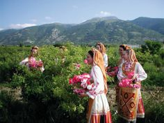 The heart of the Rose Valley in the fields of roses where dancers in traditional costume are illustrating the collection of customs practiced by hundreds of years by the local people during the rose-picking time.