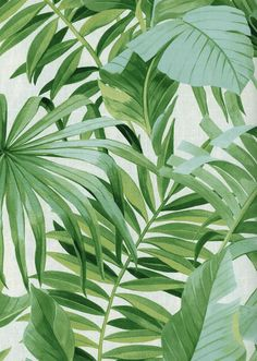 SOLSTICE Fine Decor Wallpaper -a vibrant green tropical palm leaf design wallpaper Green Leaf Wallpaper, Tree Wallpaper Iphone, Wallpaper Decor, Home Wallpaper, Pattern Wallpaper, Drawing Wallpaper, Palm Wallpaper, Tropical Leaves, Tropical Plants