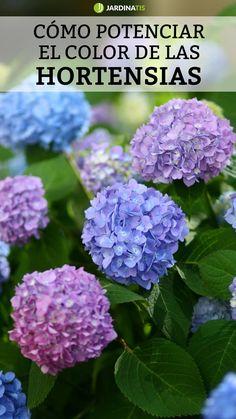 Hydrangea, Cactus Art, Plant Care, Container Gardening, Floral, Green, Nature, Flowers, Garden Ideas