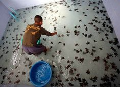 OMG I so want to be in there with all those turtles......... I would be in turtle heaven, for SURE!!!!