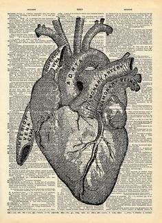 Vintage Book Art Print  Anatomical Heart Art  by missquitecontrary
