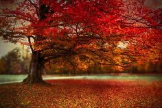 finest fall by Hannes Cmarits