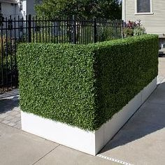 Didn't know this existed!  Artificial Outdoor Boxwood Hedge.