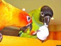 Les animaux aiment les guimauves