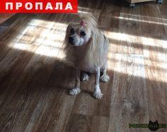 Пропала собака г.Саратов http://poiskzoo.ru/board/read28318.html  POISKZOO.RU/28318 .. августа, в районе набережной космонавтов, пропала китайская хохлатая собака. Окрас светлый, стриженая, пушистые голова, спинка ( как накидка) и лапки. Если есть информация о месте нахождения собаки, просьба позвонить по тел: ... Наталья.   РЕПОСТ! @POISKZOO2 #POISKZOO.RU #Пропала #собака #Пропала_собака #ПропалаСобака #Саратов