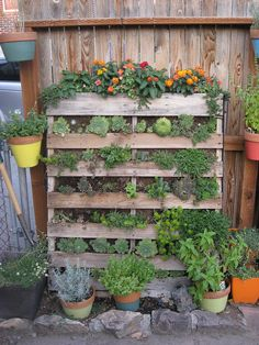 Succulent Pallet. by Jules loves stitches, via Flickr  AMAZING.