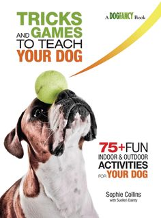 Dog Obedience Training: Dog Obedience Training El Paso and Dog Behavior Fighting Or Playing… – Sam ma Dog Training Training Your Puppy, Dog Training Tips, Potty Training, Leash Training, Training Classes, Training Collar, Training Academy, Training Schedule, Schnauzer Gigante