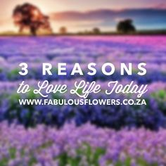 """Check out our 3 reasons to love life today www.facebook.com/fabulousflowers"""