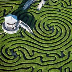 Longleat Hedge Maze in wiltshire, England
