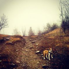 Hikes through Greenwood Conservation Area - Ajax, ON - Angus Off-Leash #dogs #puppies #cutedogs #dogparks #ajax #ontario #angusoffleash